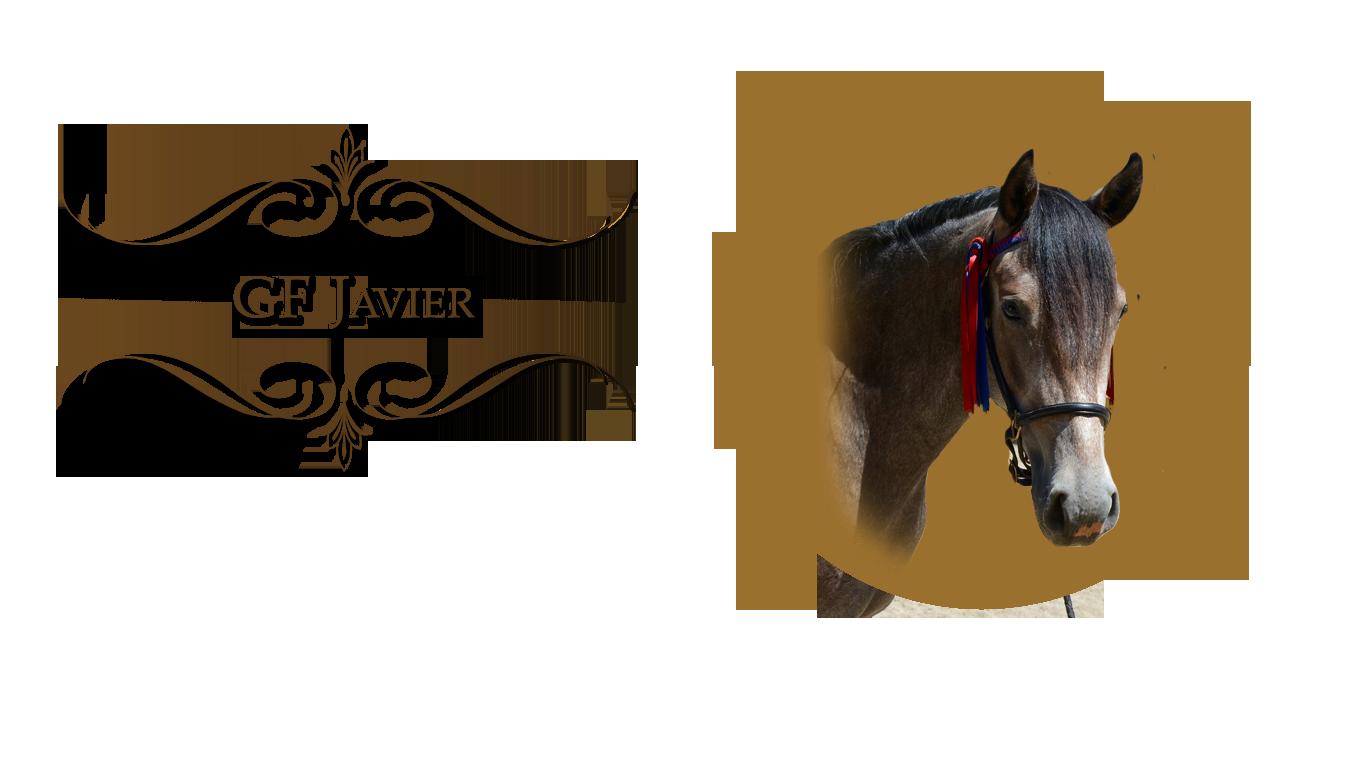 javier-headshot-2020