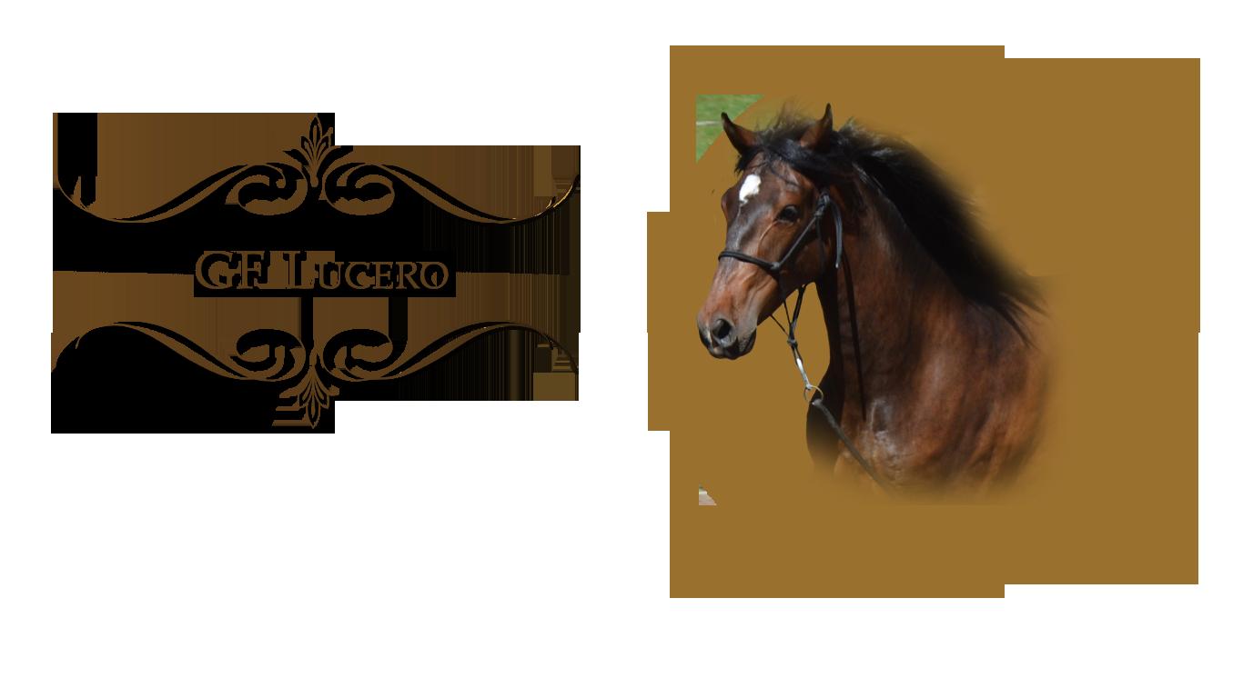 lucero-headshot-2020